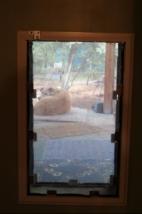 Clean Pet Door Flap