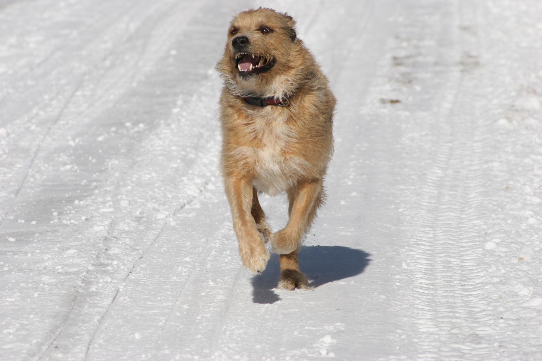 Winter Pet Safety: Top 7 Tips – Hale Pet Door Pet Tips