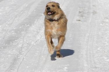 Most dogs enjoy the snow, but be sure to keep them safe