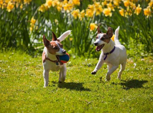 Hale Pet Door lets the dogs out to enjoy spring