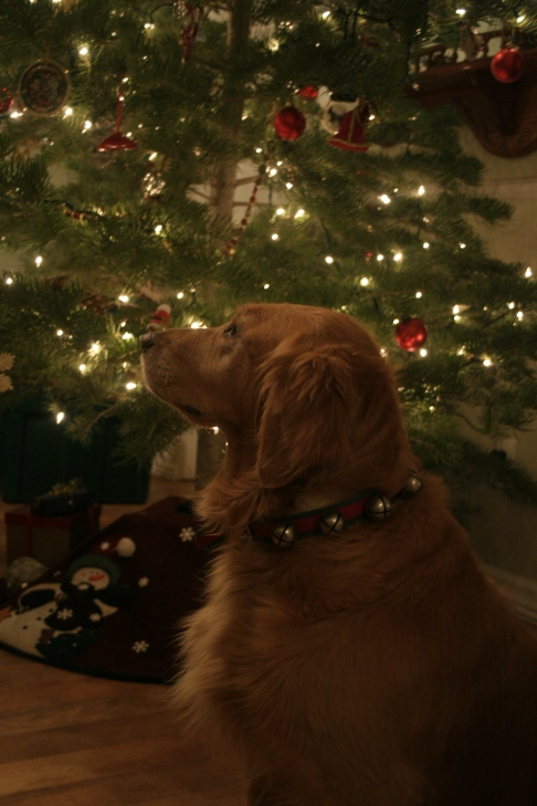 Golden Retriever with Christmas Tree