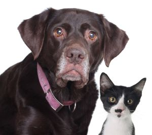 Lab and Cat