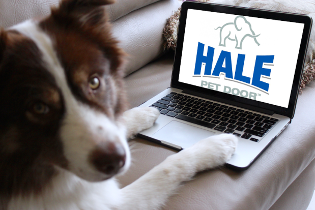 Dont Forget Your Pets In Your Back To School Plans Hale Pet Door