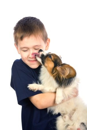 4539143 - a little dog licking a young boy's nose